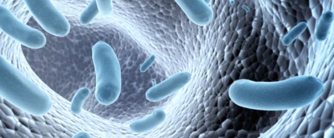 Το μικροβίωμα του εντέρου επηρεάζει την απώλεια κιλών