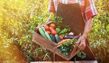 Νέα στρατηγική ΕΕ «από το αγρόκτημα στο πιάτο» για υγιεινά, βιώσιμα τρόφιμα