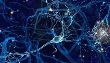 """Τα κύτταρα του εγκεφάλου """"μιλούν"""" μεταξύ τους και καθορίζουν τη ψυχική υγεία"""