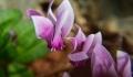 Τα φυτά στο σπίτι βελτιώνουν την ψυχική κατάσταση στο lockdown