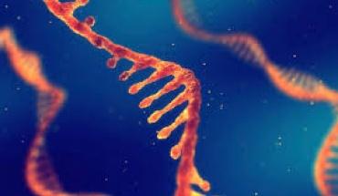 """Εμβόλια έναντι του SARS-CoV-2 που βασίζονται στον """"αγγελιαφόρο"""" RNA"""