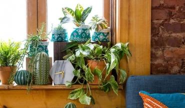 Φυτά στο σπίτι για μεγαλύτερες ψυχικές αντοχές
